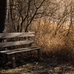 bench-1190768_1920