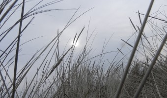 grass-17789